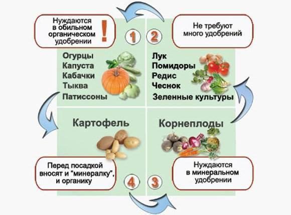 Выращиваем огурцы, перцы и баклажаны в телице: 8 шагов к успеху