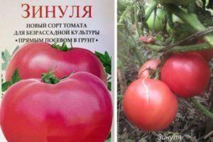 Томат московские звезды: описание и характеристика сорта, выращивание и уход с фото