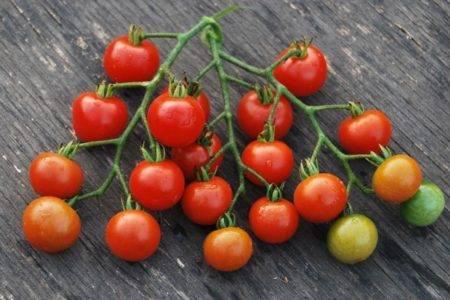 Сорт томата «красная гроздь»: описание, характеристика, посев на рассаду, подкормка, урожайность, фото, видео и самые распространенные болезни томатов