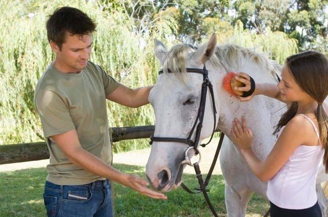 Как правильно ухаживать за лошадью — содержание, кормление, потребление воды, чистка животного