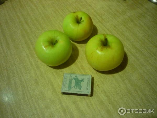 Биологически ценный сорт яблок — феникс алтайский
