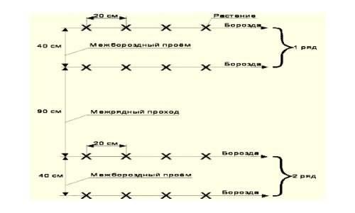 Правила посадки огурцов в открытом грунте