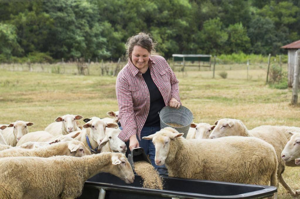 В каком месяце стригут овец. сроки, способы и техника стрижки овец, советы и рекомендации