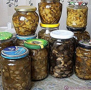 Лисички соленые: рецепт с фото пошагово. как солить лисички на зиму в банках?