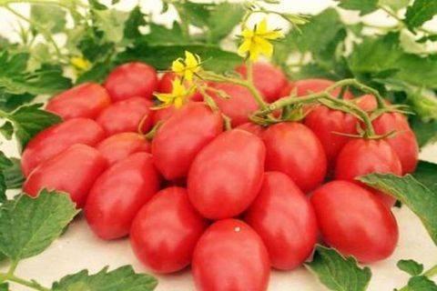 Описание томата груша красная