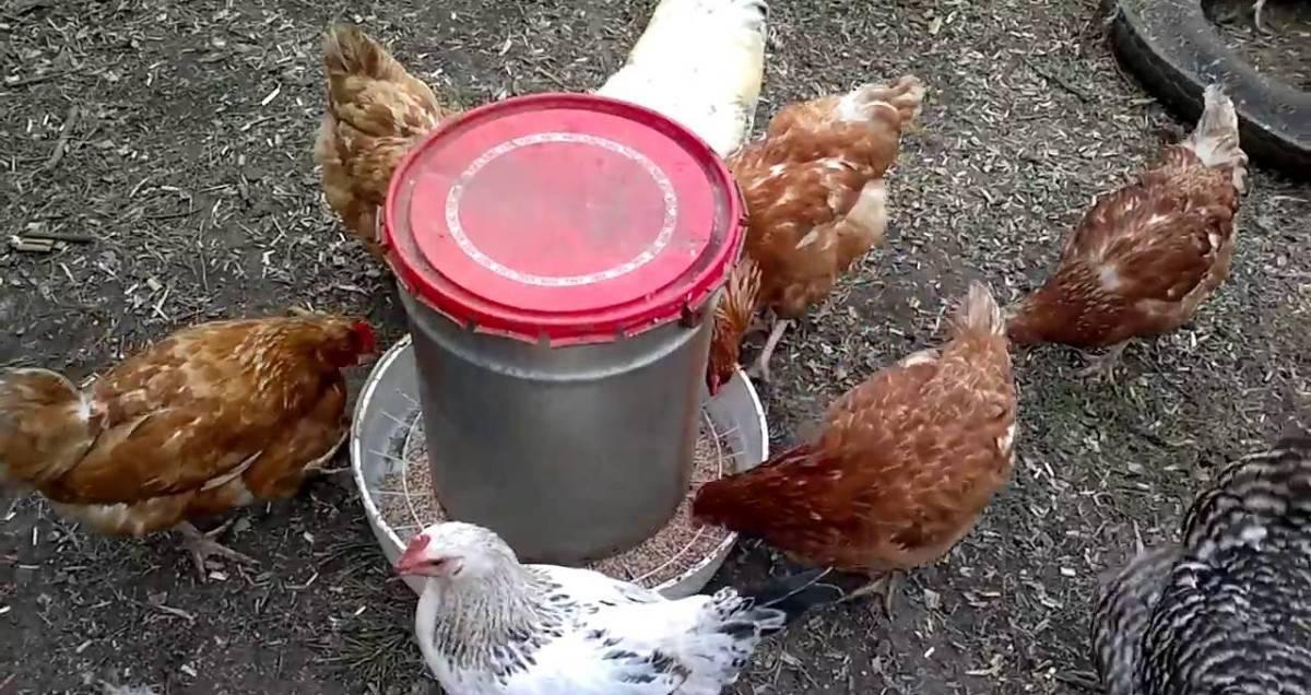 Как сделать надежный брудер для цыплят?
