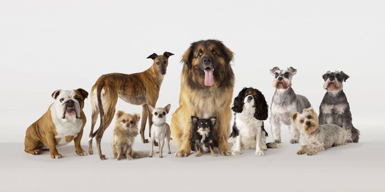 Средние породы собак