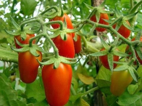 Вяленые помидоры в духовке - 5 рецептов на зиму в домашних условиях с фото пошагово