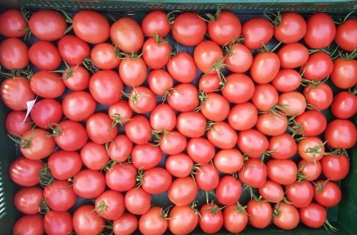 Сорт томата японка: описание и фото