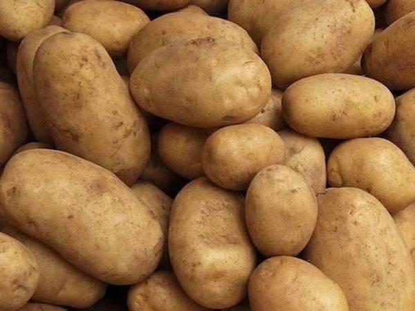 Сорта картофеля наташа описание фото