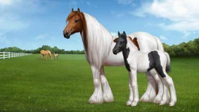 Описание лошадей андалузской породы, плюсы и минусы, как содержать и стоимость
