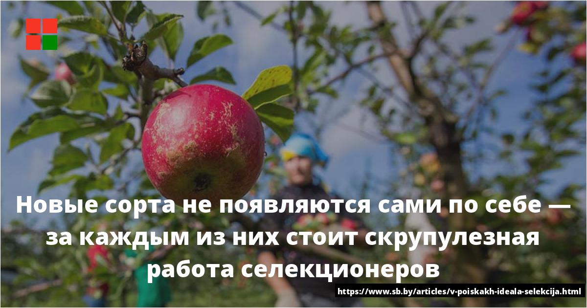 Описание сорта яблонь Память Сюбаровой и рекомендуемые регионы выращивания
