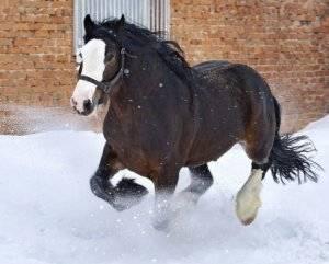 Описание породы лошадей владимирский тяжеловоз, содержание и разведение