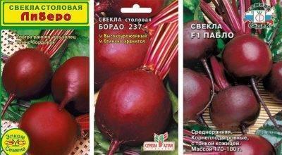 Сорт свеклы «пабло»: описание, фото и отзывы