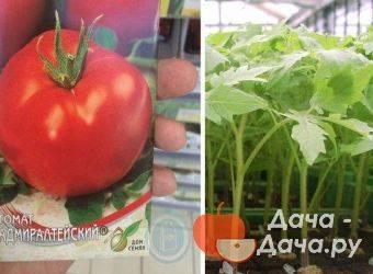 Описание сорта томата Адмиралтейский и его характеристика