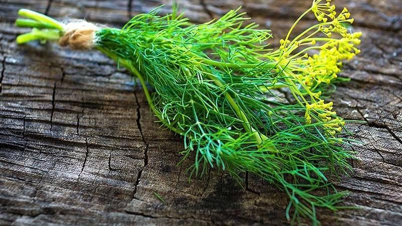Посадка укропа на зелень: лучшие сорта с названиями, описанием и фото, отзывы