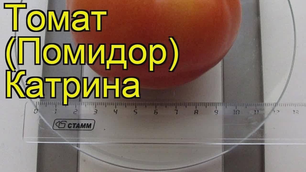 Томат катрина f1: характеристика и урожайность сорта, особенности выращивания и ухода