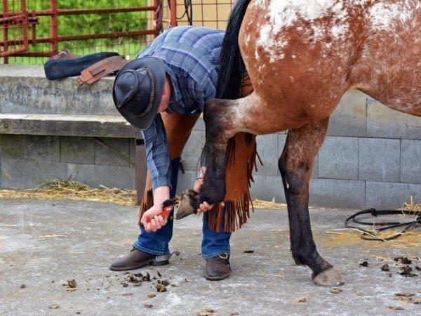 Каким должен быть уход за лошадью
