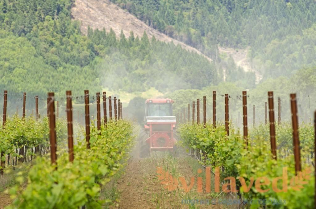 Инструкция по применению фунгицида «хорус» для обработки винограда и сроки ожидания