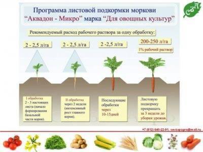 Червивая морковь: причины, эффективные методы борьбы