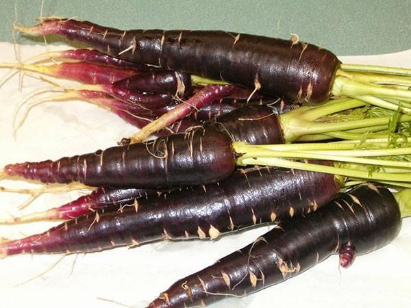 Необычные корнеплоды: разноцветная морковь (сорта, фото, описание)