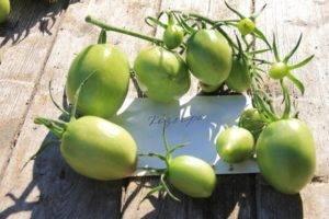 Сорт томата кибиц: описание, фото, видео