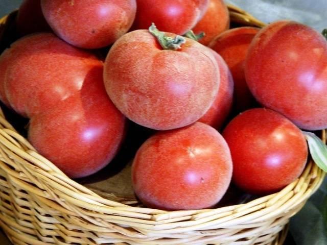 За что любят томаты серии «персик»?