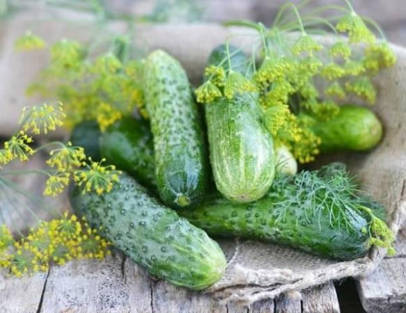 Огурцы гирлянда — сказочный урожай на грядке