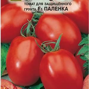Описание томата паленка, особенности его выращивания