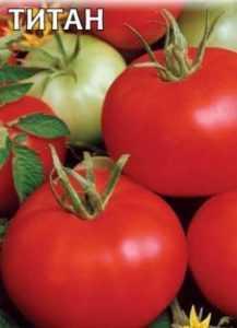 Сорт томата «толстый боцман»: фото, отзывы, описание, характеристика, урожайность