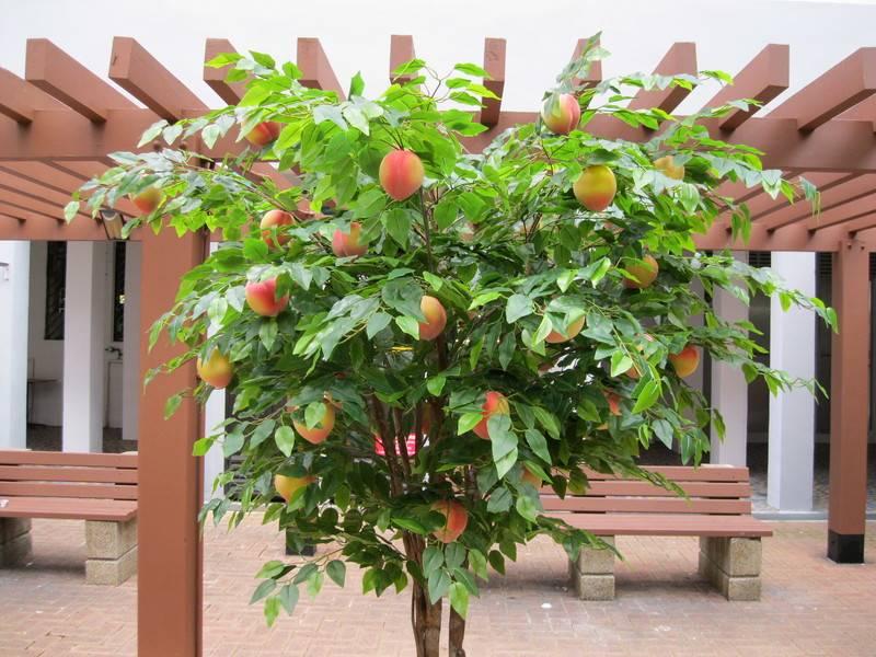 На что можно привить персик и как правильно, сроки окулировки