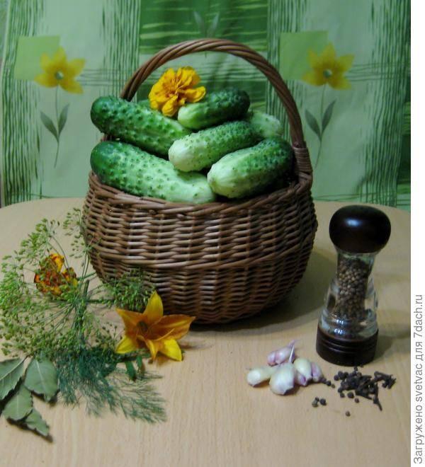 Огурец маменькин любимчик f1: отзывы, фотографии и описание сорта, способы выращивания