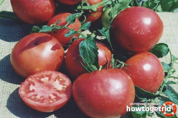 Томат титан (красный, розовый): описание сорта, фото, отзывы