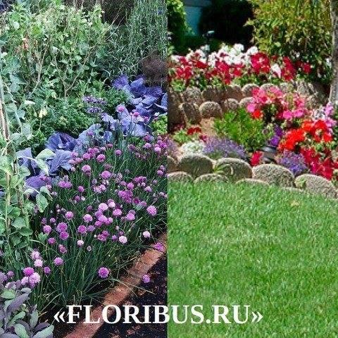 Популярные сорта и названия низкорослых многолетних цветов: фото бордюрных зон с красочным декором