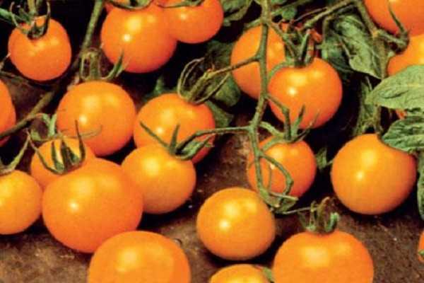 Корнабель — сладкий томат загадочной формы