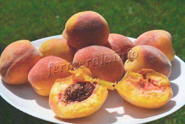 Персик сорт золотая москва. персик золотая москва: описание с фото, правила ухода