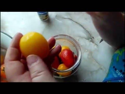 Почему трескаются помидоры при созревании в открытом грунте – способы борьбы с растрескиванием