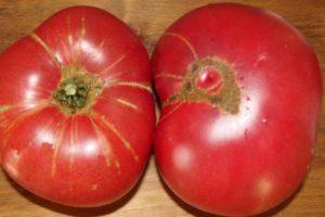 Томат козырь: описание и характеристика сорта, урожайность с фото