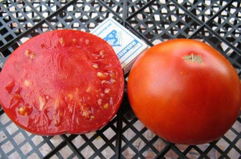 Томат король рынка — описание сорта, урожайность, фото и отзывы садоводов
