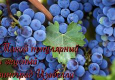 Описание винограда сорта денисовский, правила посадки и ухода