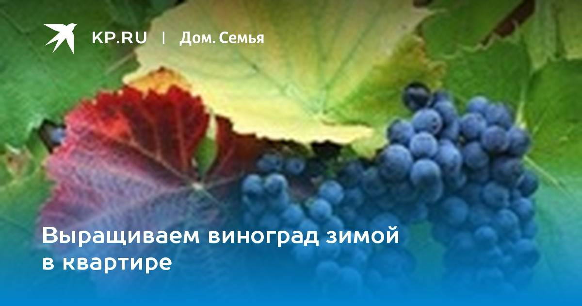 Как размножить виноград: приёмы, доступные любому дачнику