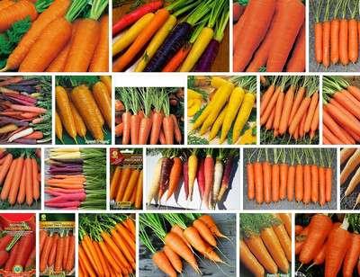 Характеристика, описание и особенности выращивания моркови нандрин