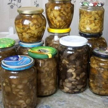 Как мариновать белые грибы в банках на зиму? 6 простых рецептов приготовления в домашних условиях