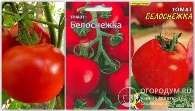 Описание сорта томата торквей и его характеристики