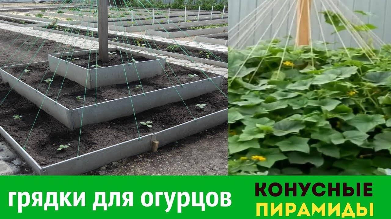 3 способа выращивания огурцов на маленьком участке