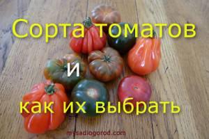 Обзор супердетерминантных сортов помидоров для теплиц и открытого грунта