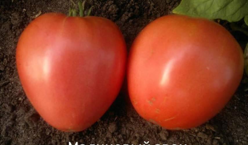 Особенности выращивания томата малиновый звон