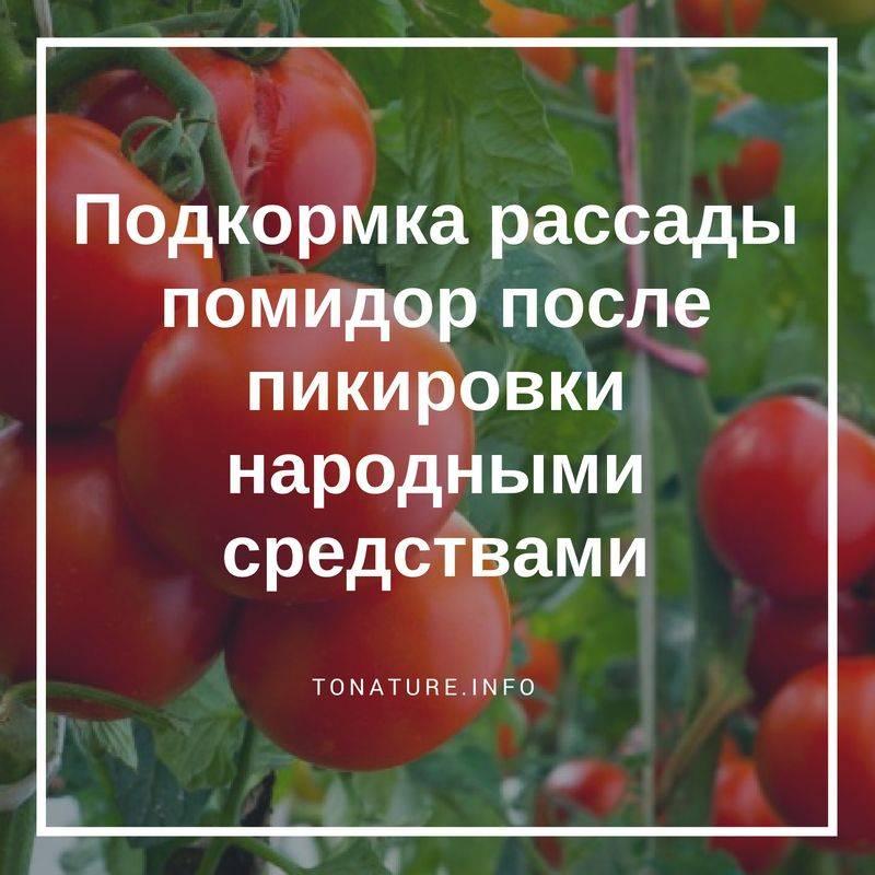 Чем подкормить томаты после пикировки