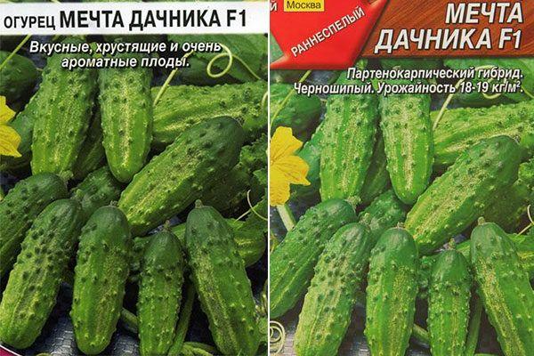Залог обильного и вкусного урожая — огурец бенефис f1: описание сорта и советы по выращиванию