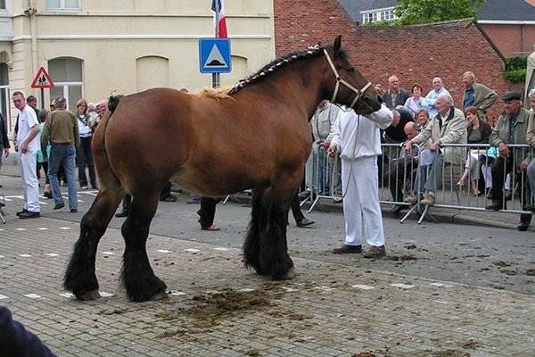 Пятёрка самых больших лошадей в мире